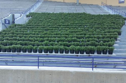 Northwestern Football: Ryan Field Empty Seats to be Covered by Plants (PHOTO)