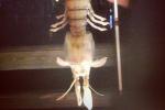 Angler Catches Terrifying Shrimp-Like Creature