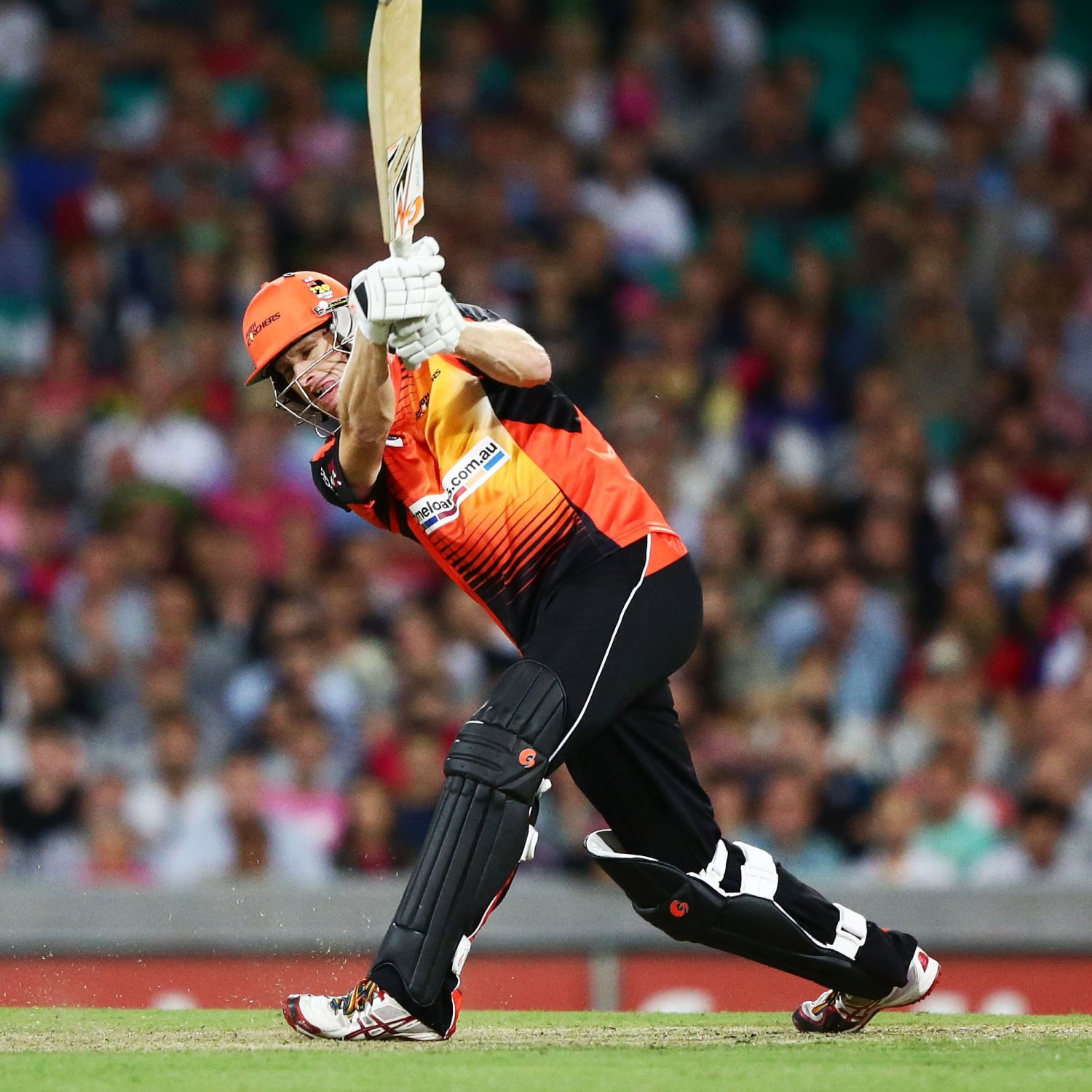 perth scorchers - photo #48