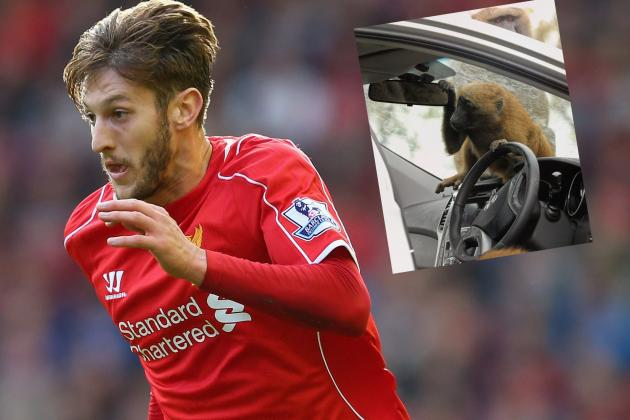 Liverpool Star Adam Lallana's Car 'Torn to Pieces' by Monkeys