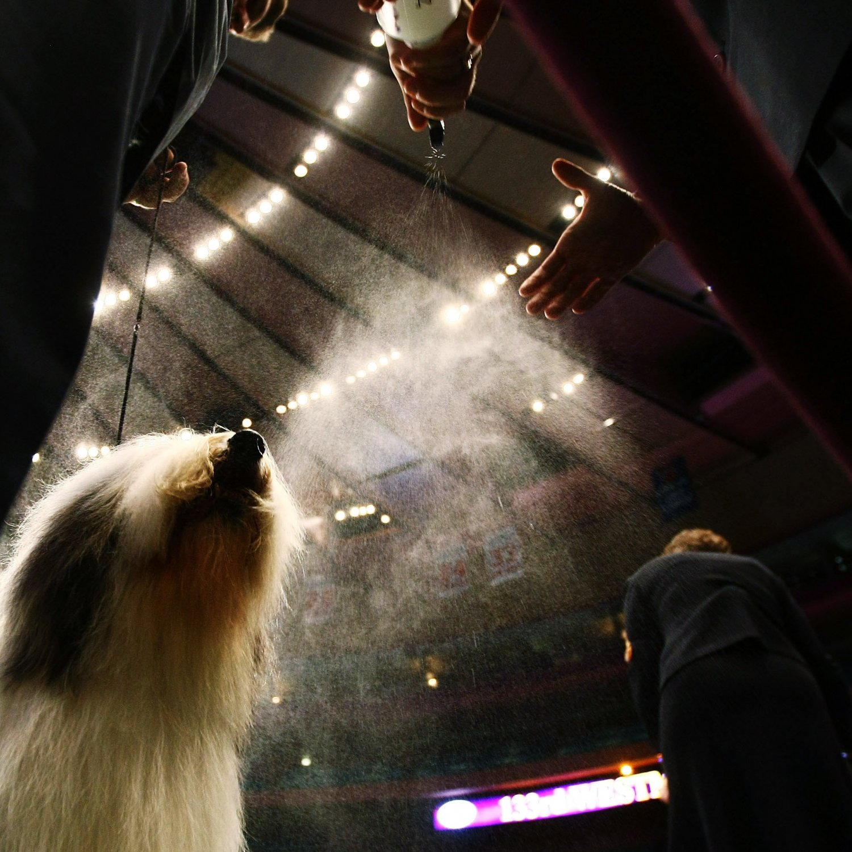 Http Www Nbcsports Com Dog Show