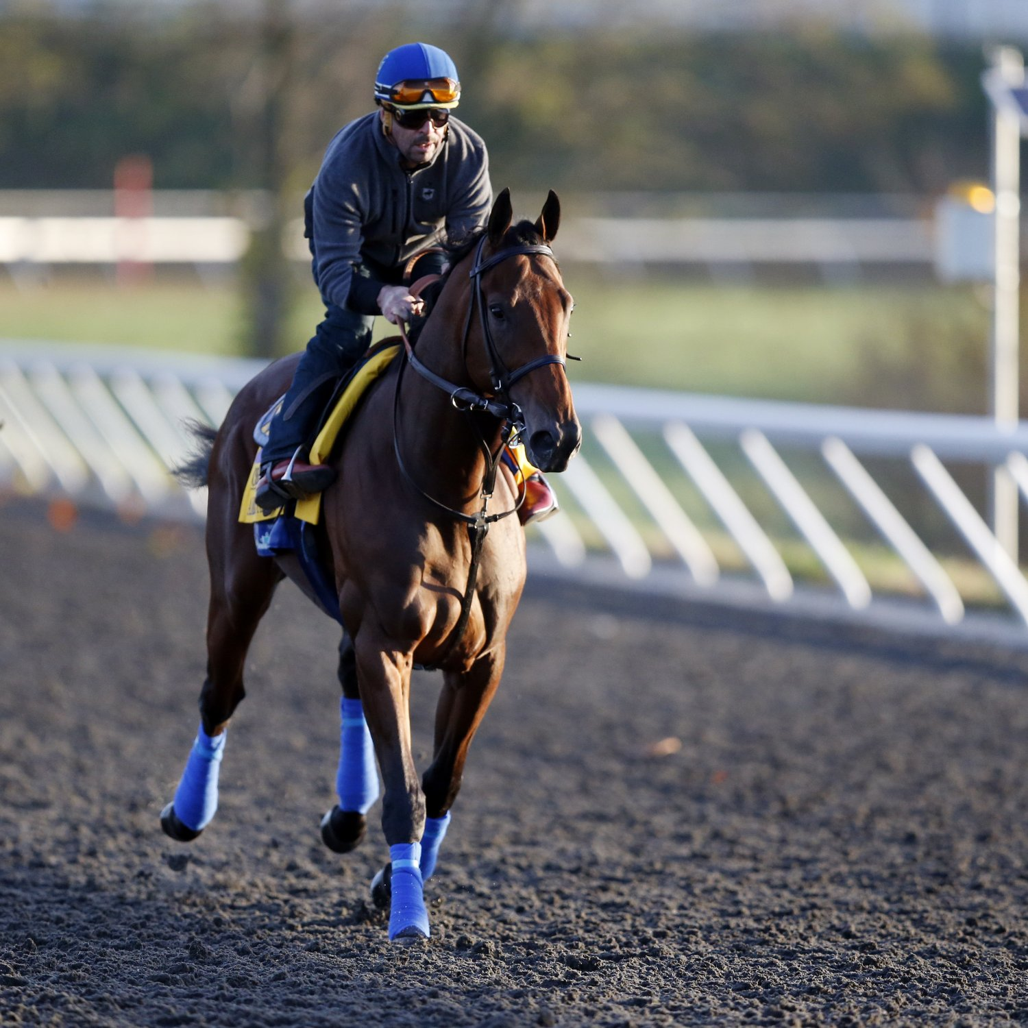 Breeders Cup 2015 Entries Classic Lineup Odds And