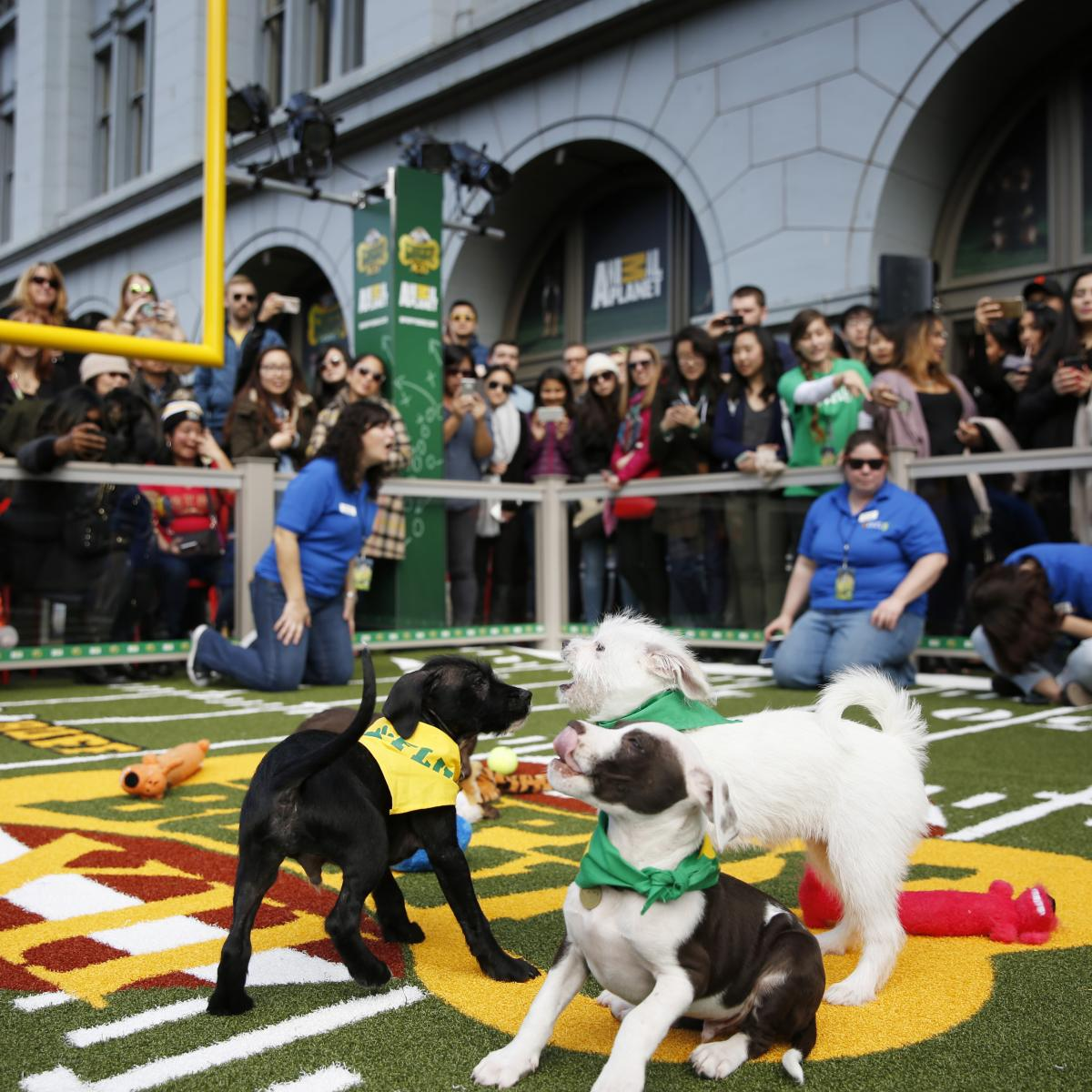 Can You Adopt The Dogs From The Puppy Bowl