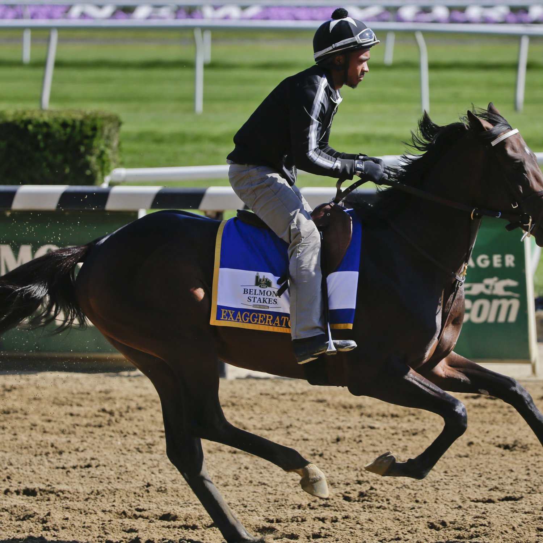 Horse racing picks for belmont : Online sport betting wiki
