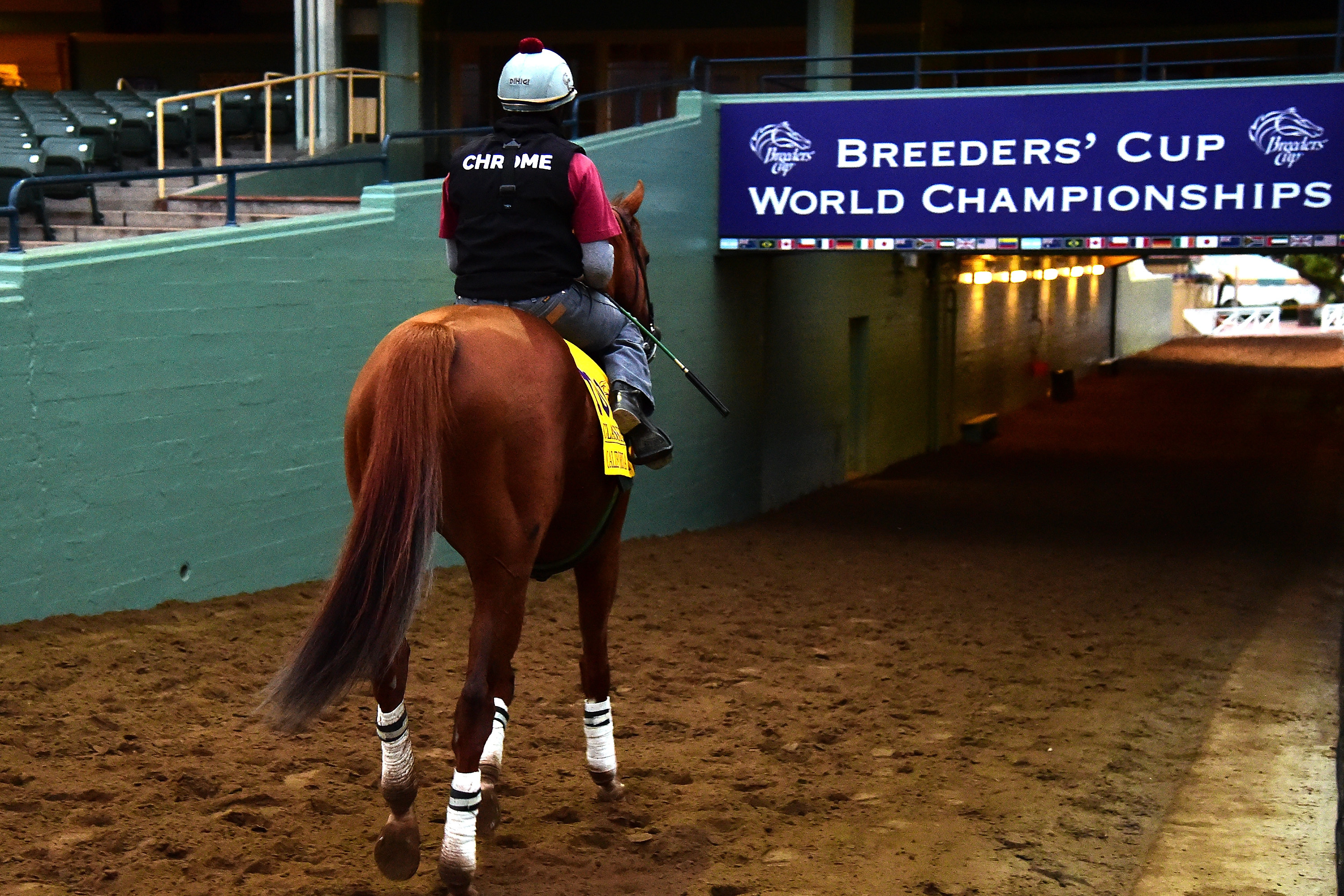 Breeders Cup 2016 Odds And Predictions For All Entries