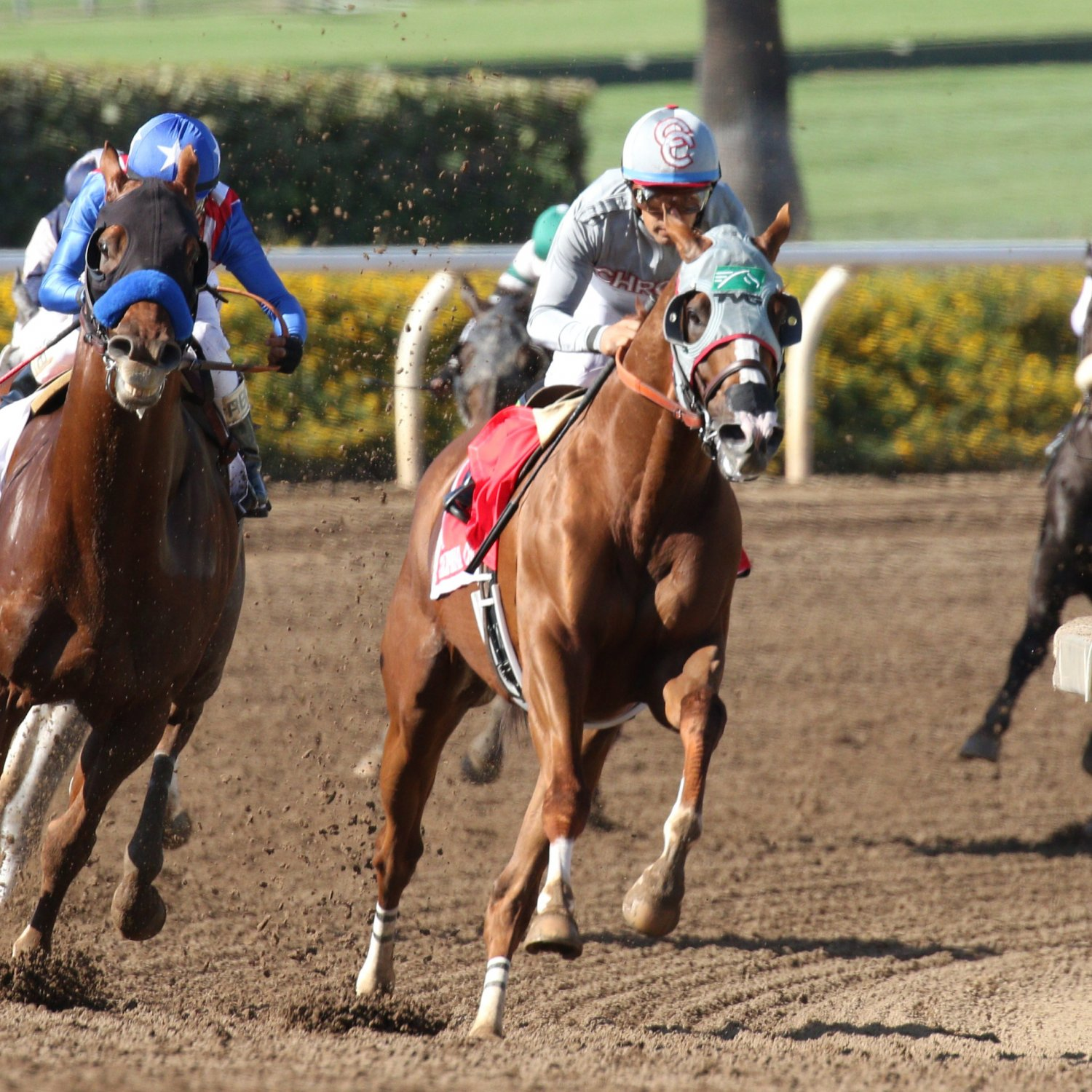 Breeders Cup 2016 Entries Lineup Odds And Predictions