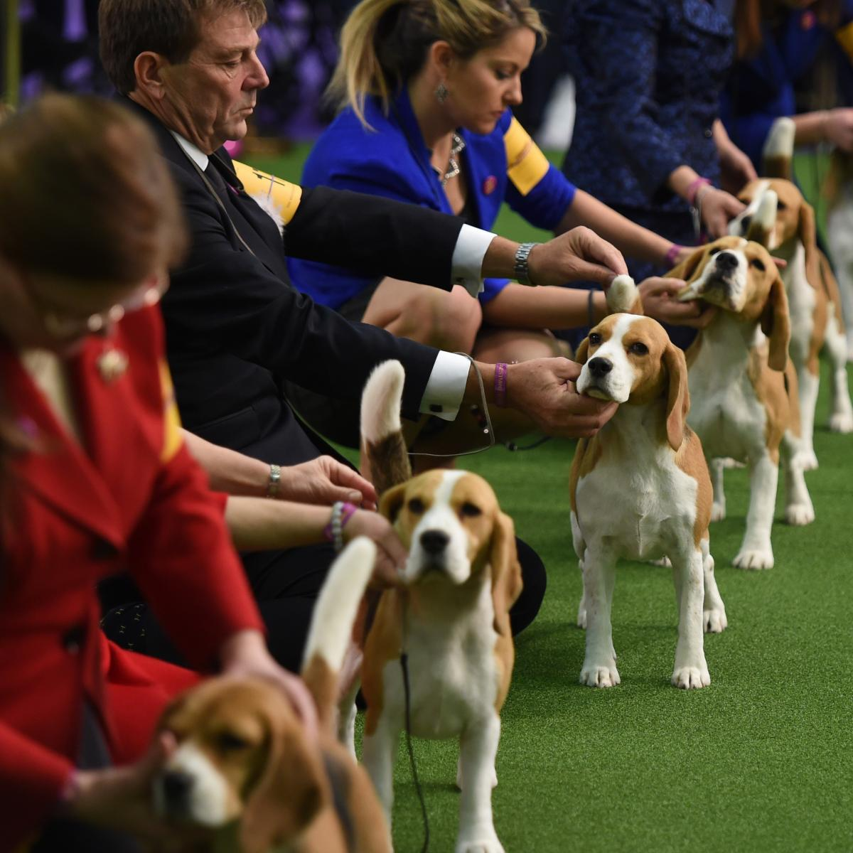 Westminster Dog Show  Breed Results