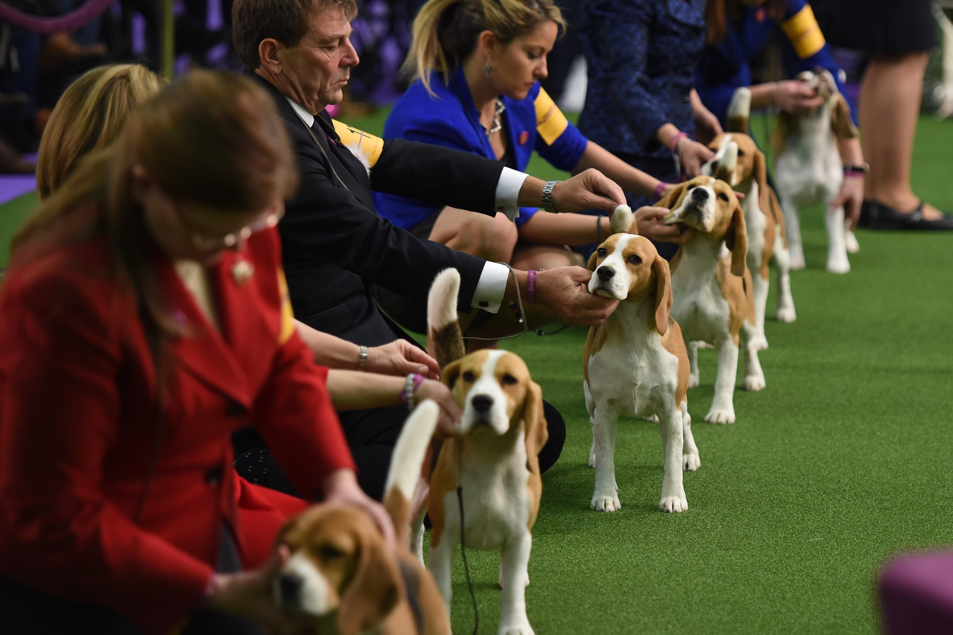 Westminster Dog Show App