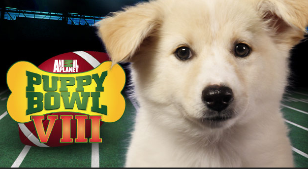 Puppy Bowl VIII: 5 Best Videos from Last 7 Years