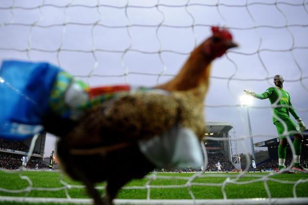 The Blackburn Rovers Chicken and the 15 Craziest Animal Streakers