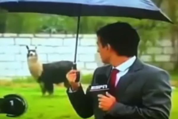 The Funniest Sports Reporter Fails