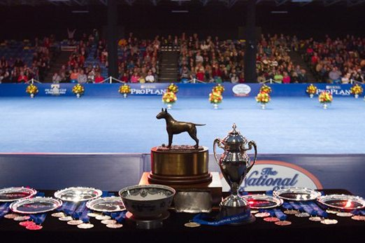 National Dog Show 2012 Results: Best in Show and Group Winners