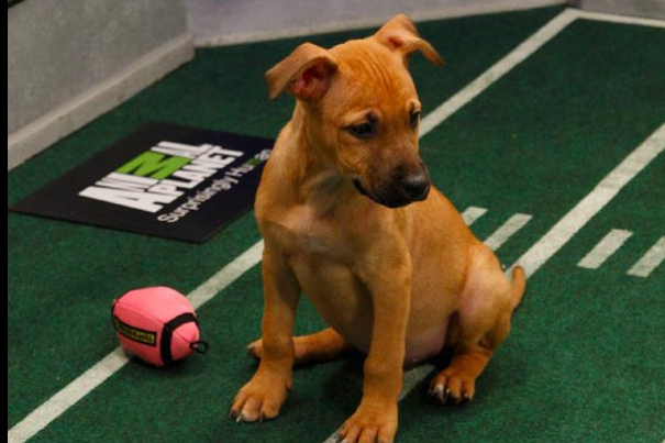 Puppy Bowl IX: 5 Best Videos from Last 8 Years