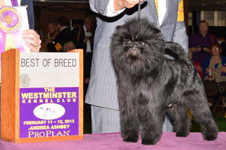Westminster Dog Show 2013 Results: Best of Breed Winners and Day 2 Recap