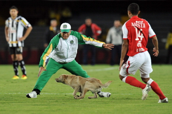 Defiant Ducks, Sassy Squirrels and More: The Top 5 Animal Pitch Invaders