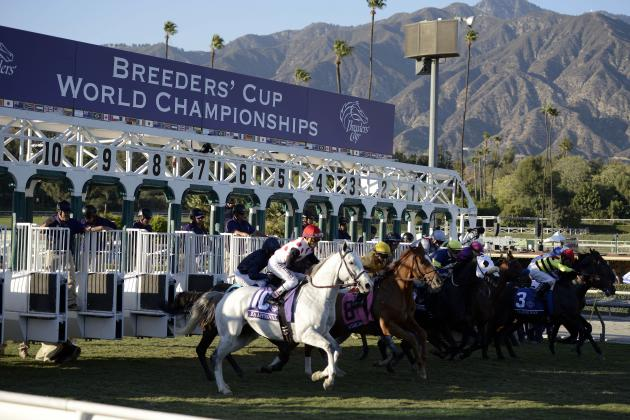 Breeders' Cup 2013: Biggest Takeaways from This Year's Races