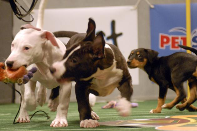 Puppy Bowl X 2014: Best Videos from Last 9 Years