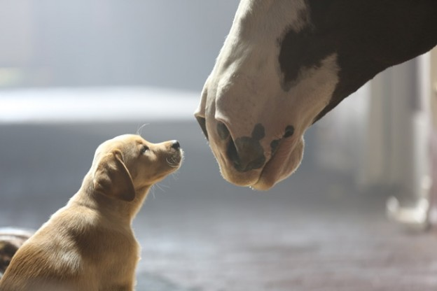 Super Bowl Commercials 2014: Grading Best and Most Memorable Ads