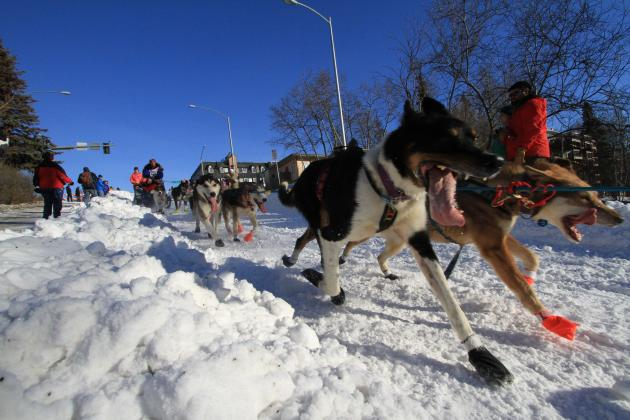 Iditarod 2014: Daily Results, Updated Schedule Info and More