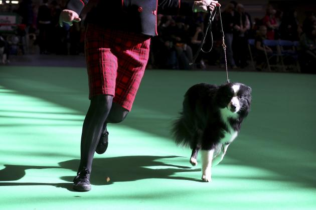Crufts Dog Show Results 2014: Daily Scores, Winners and Updated Schedule