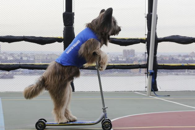 The Smartest Pets in Sports