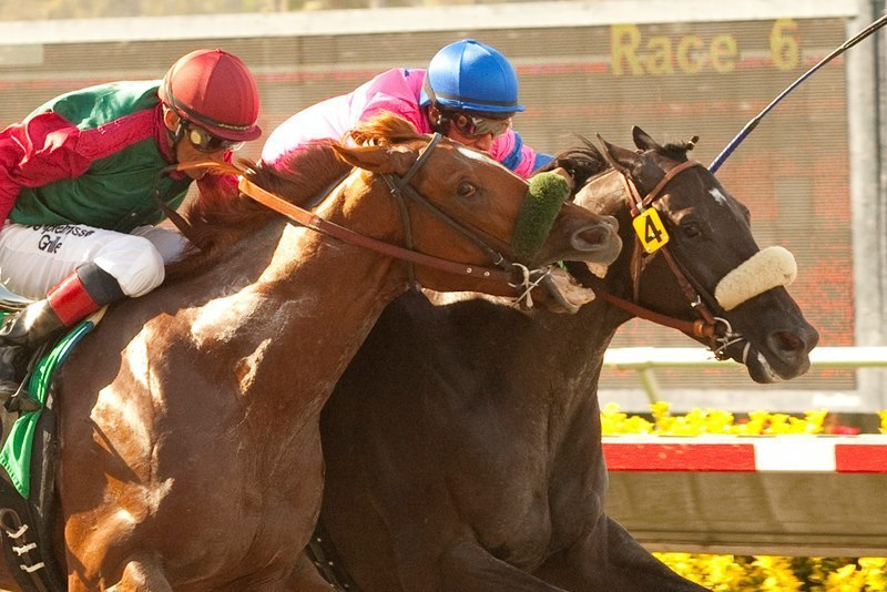 Del Mar Horse Biting: Race Horse Pulls a Mike Tyson | Bleacher Report | Latest News, Videos and ...