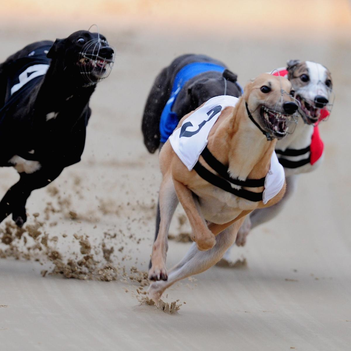 irish greyhound derby betting terms