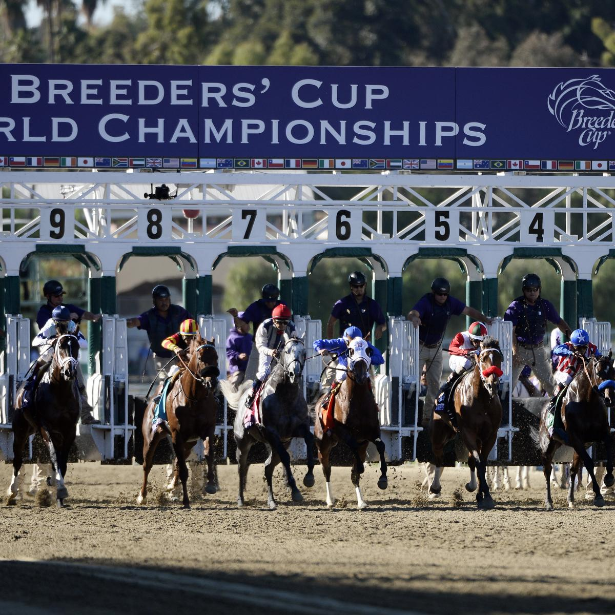 Breeders Cup 2014 Odds And Predictions For All Races