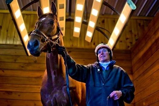 Living Like A King The Pampered Life Of A Racehorse