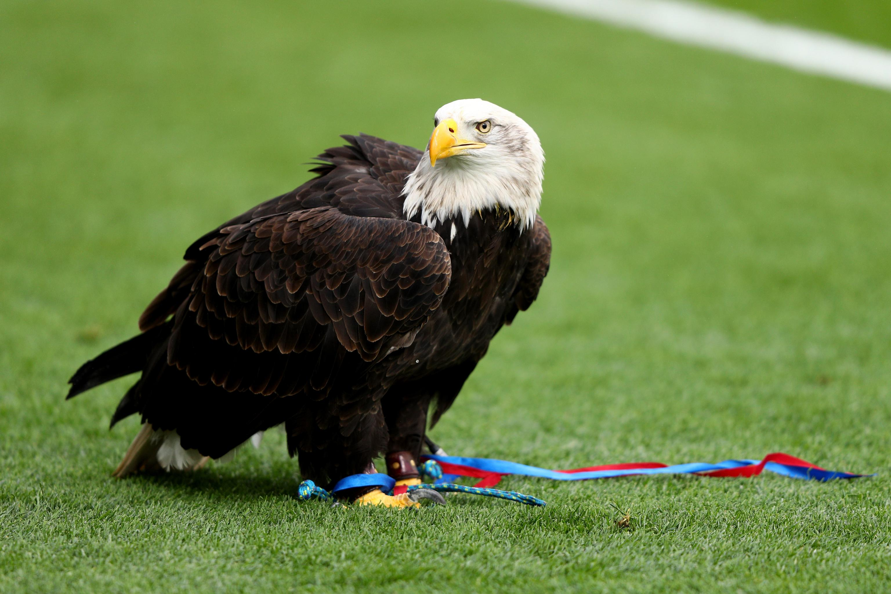 Charlton Athletic Fan Found Guilty of Attacking Crystal Palace39s Eagle  Mascot  Bleacher Report  Latest News Videos and Highlights
