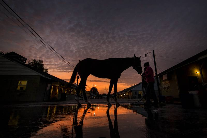 Kentucky Derby 2017 Contenders: Lineup and Pedigree for All