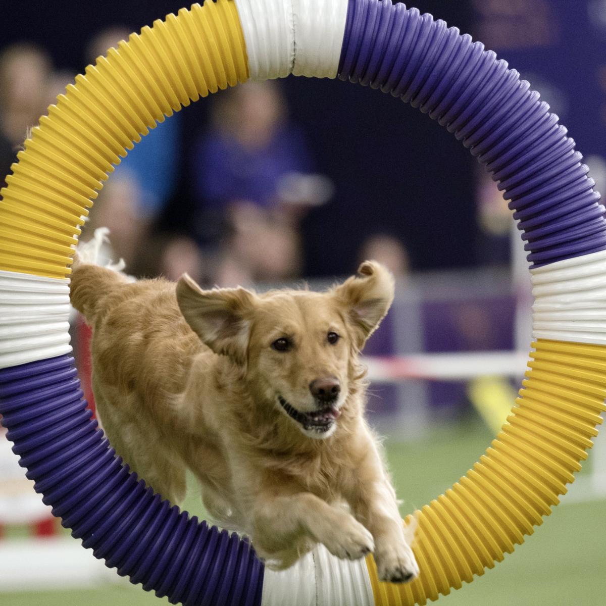Westminster Dog Show Tv Schedule