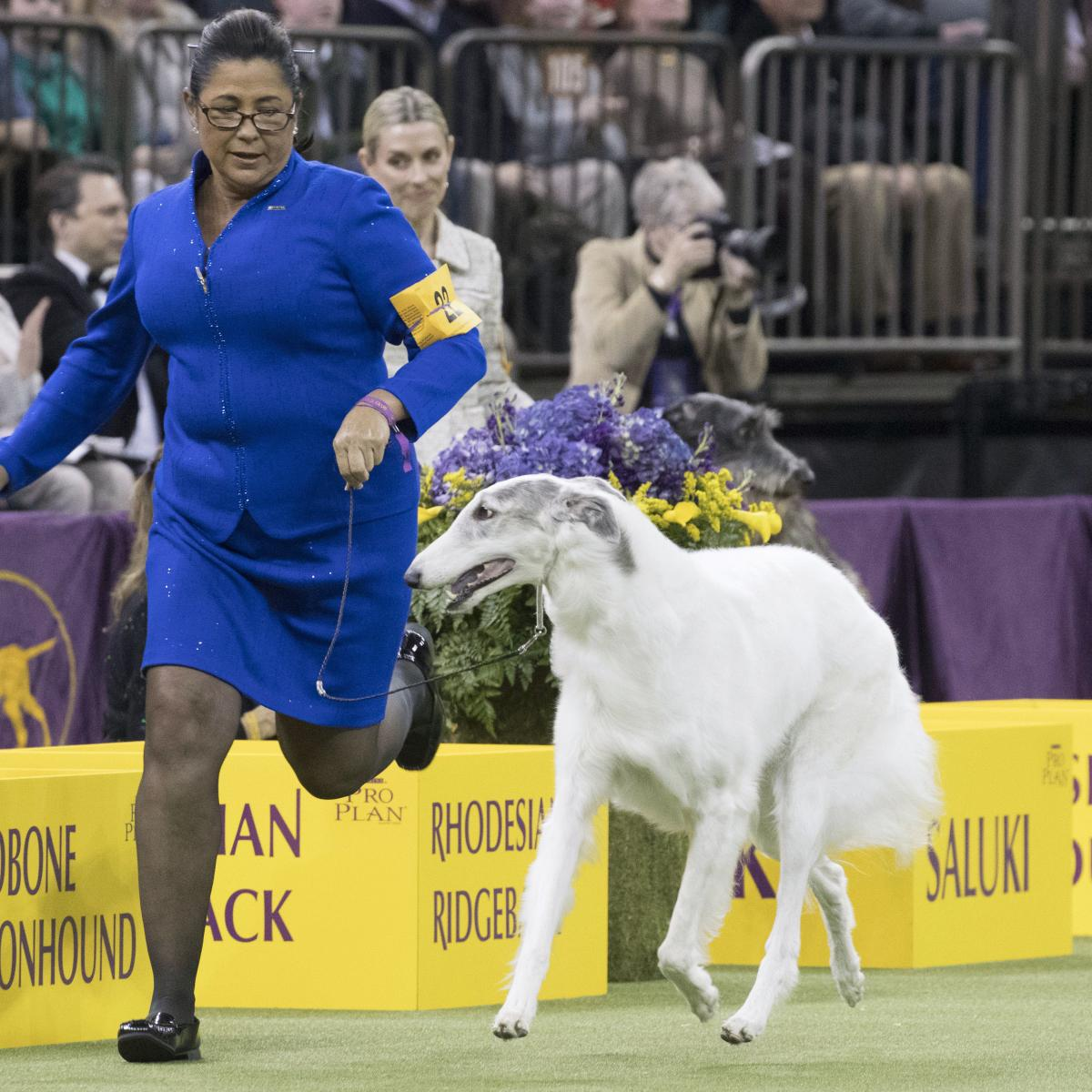Pug Results At Westminster Dog Show
