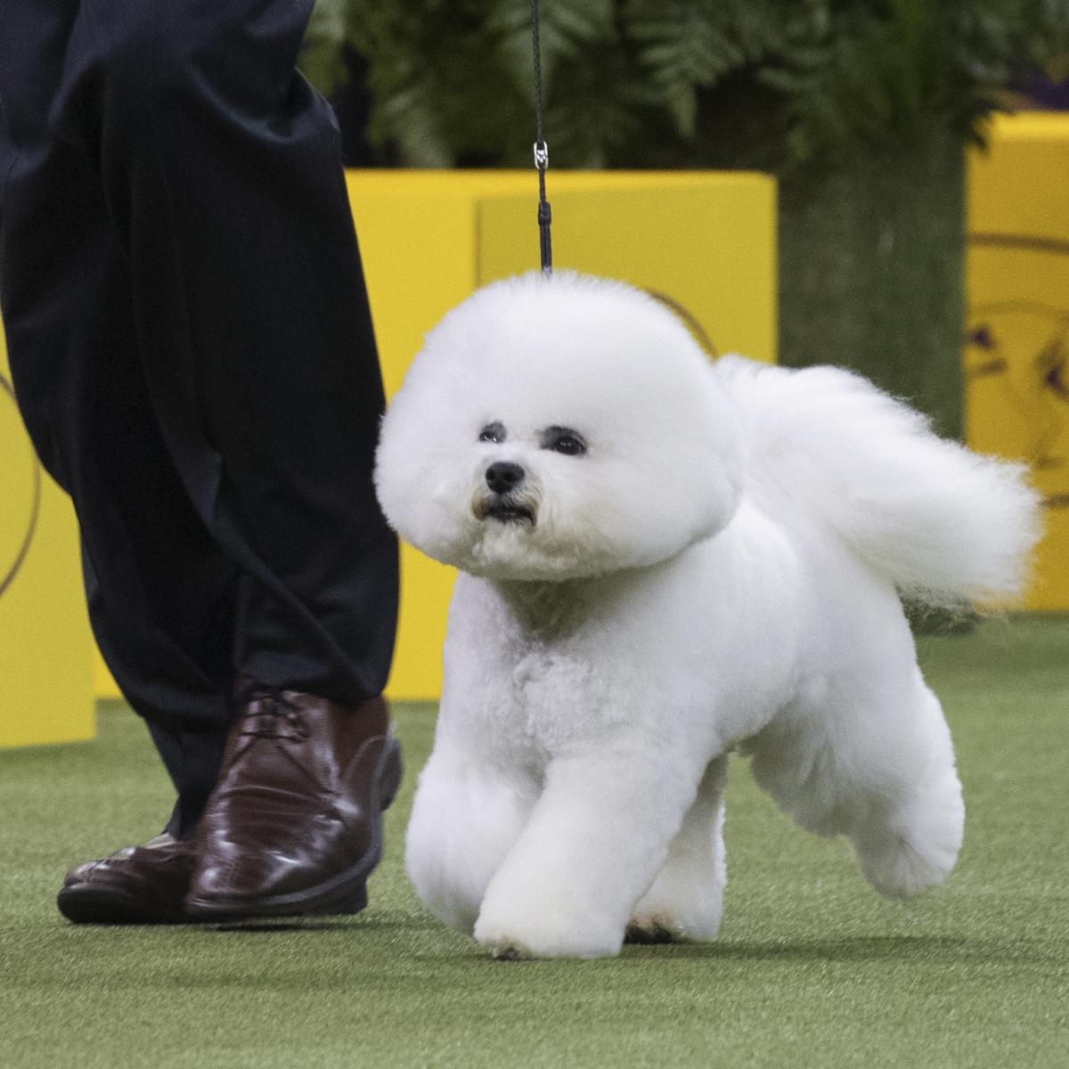 Westminster Dog Show Group Results