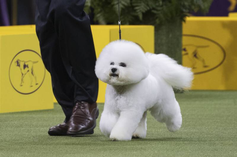 Westminster Dog Show 2018 Results: Best of Breed Winners and