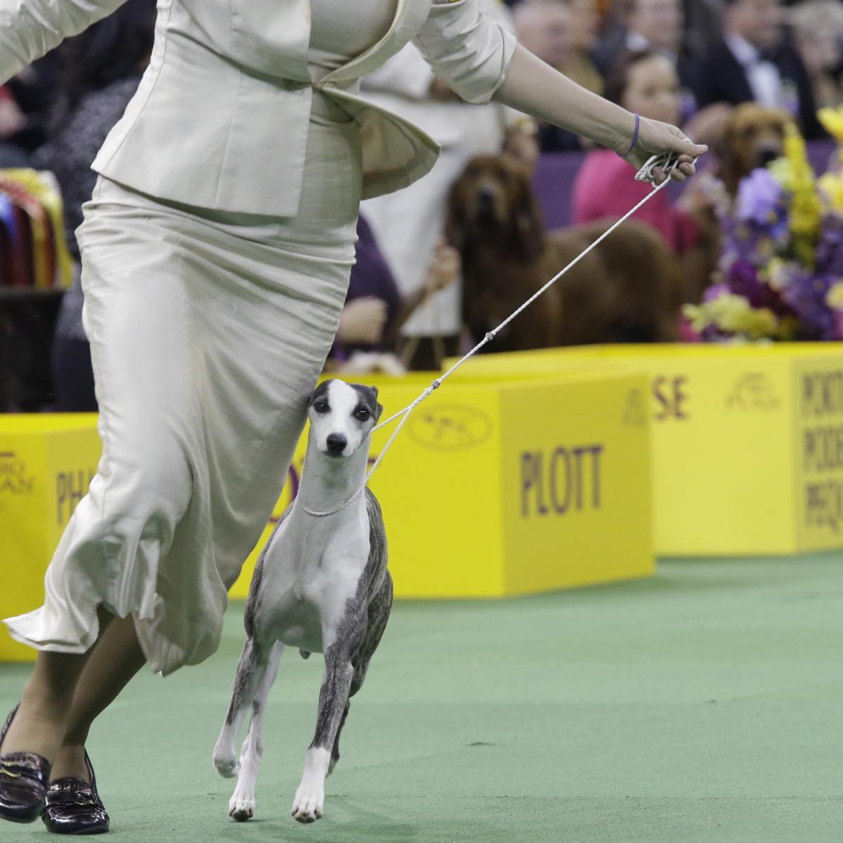 national dog show 2018 results best in show and list of winners