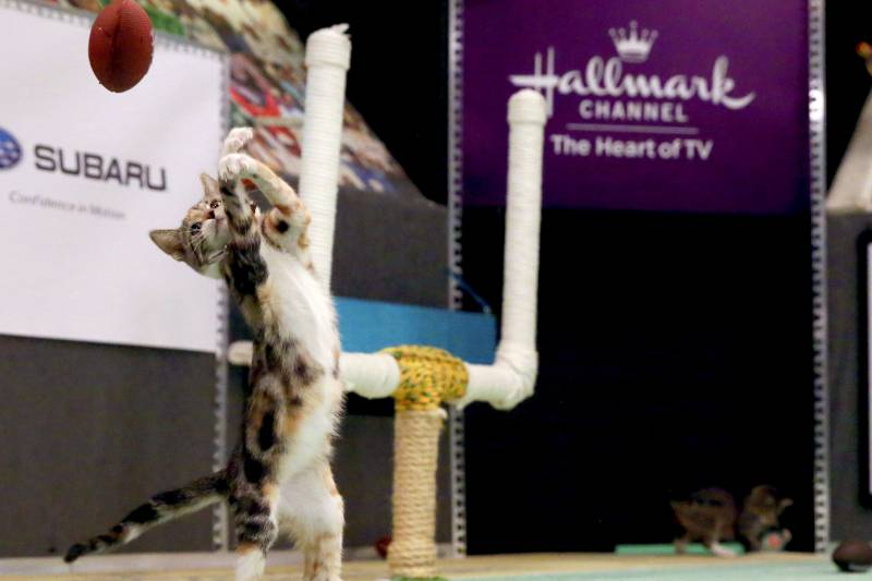 The Kitten Bowl Results