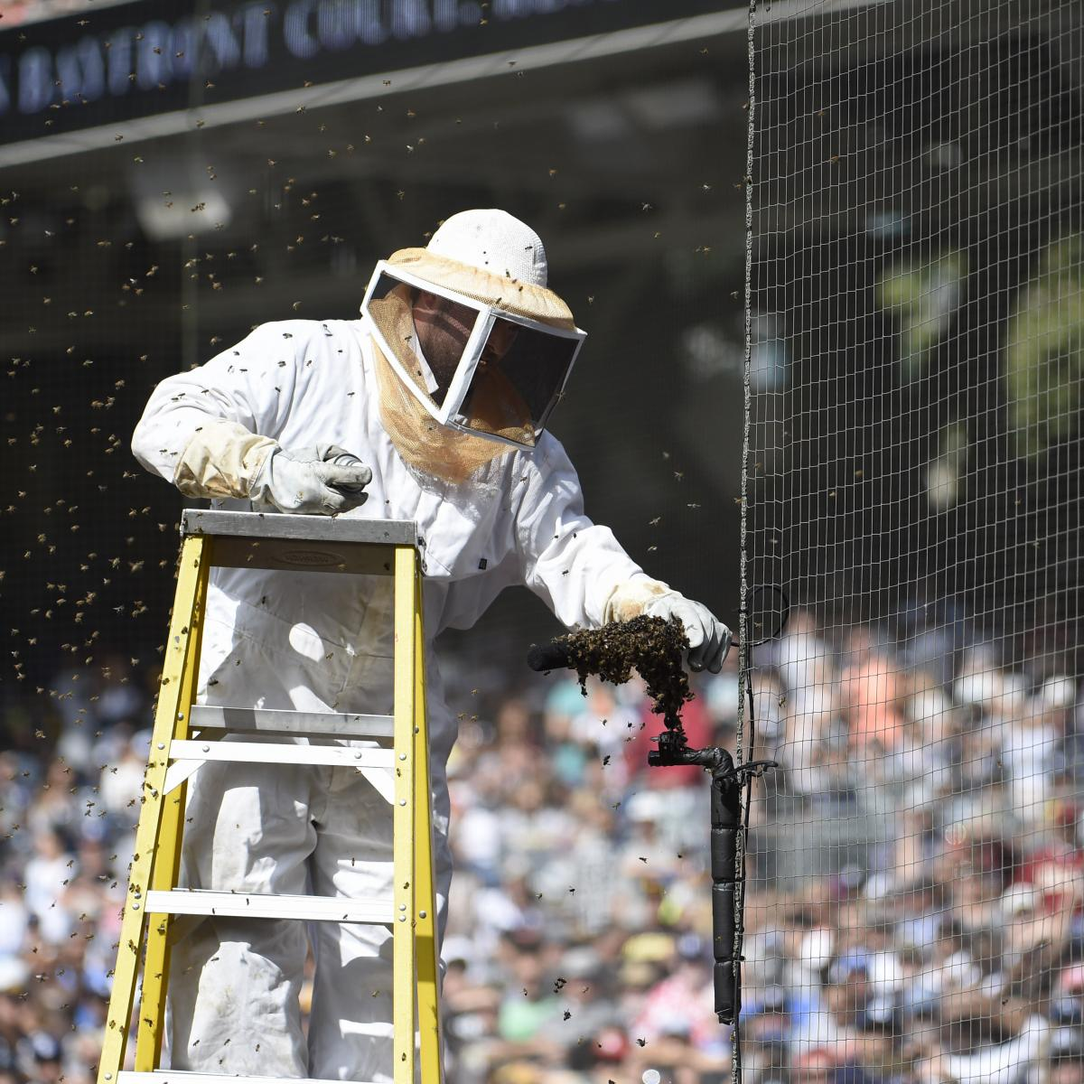 Video: Marlins Vs. Padres Game Delayed As Bees Swarm Near