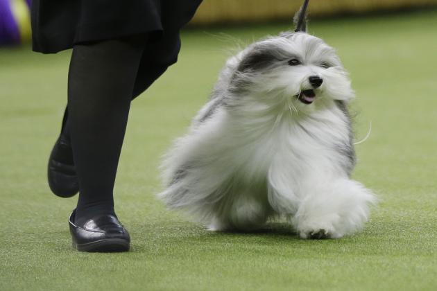 National Dog Show 2019 Results Best In Show And List Of Winners