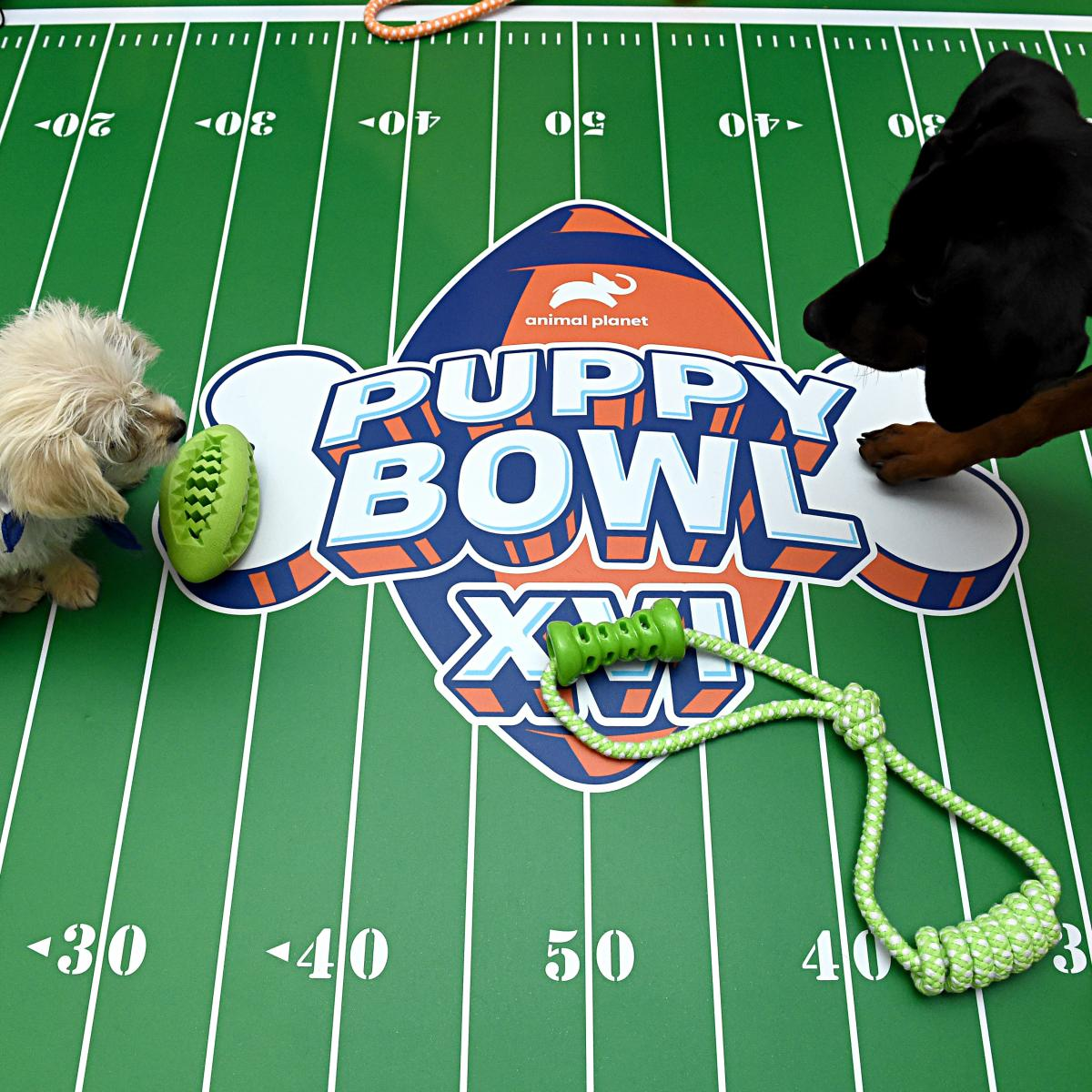 Puppy Bowl XVI 2020: Date, Starting Lineup, TV Schedule and More