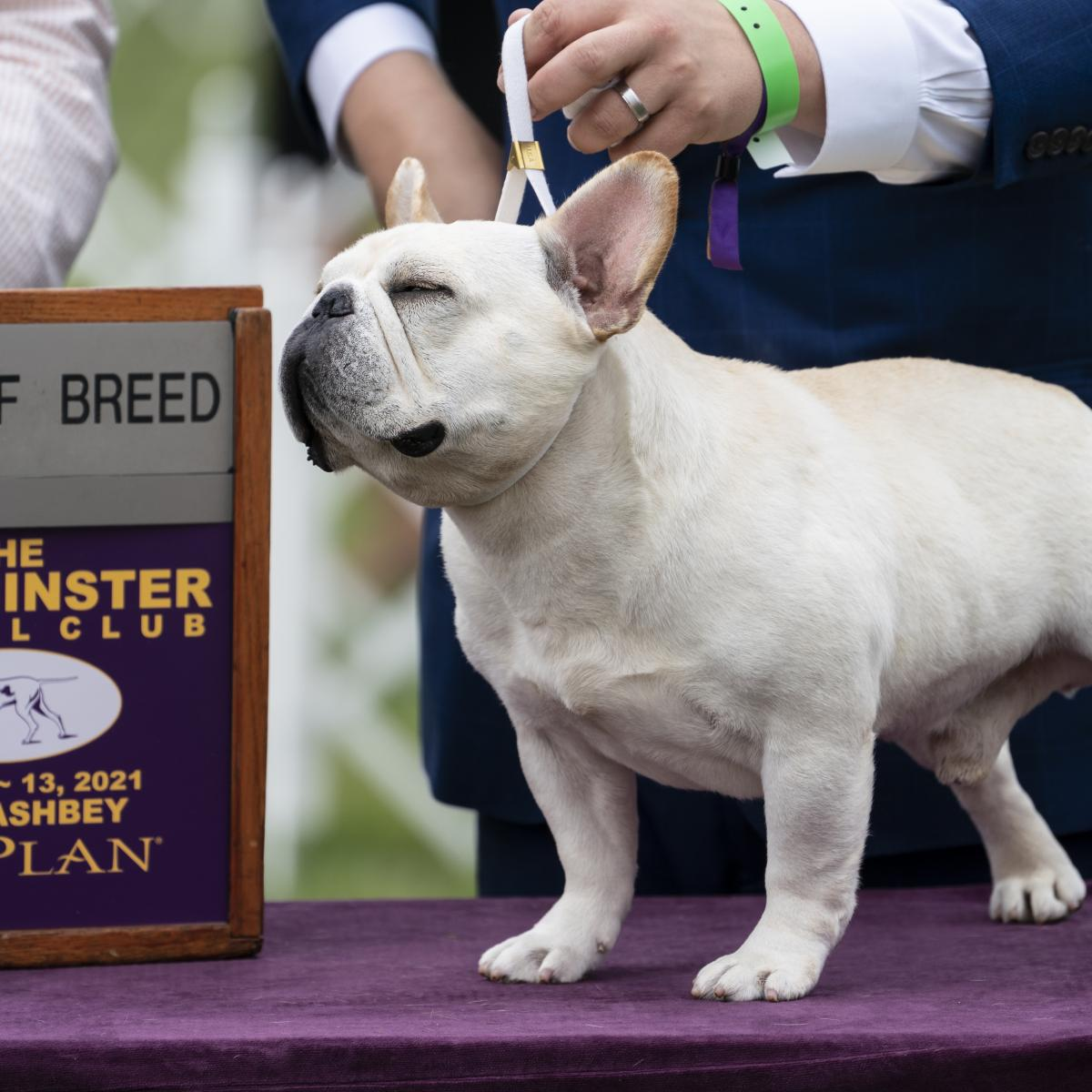 2021 Westminster Dog Show: TV Coverage, Live-Stream Schedule for Sunday